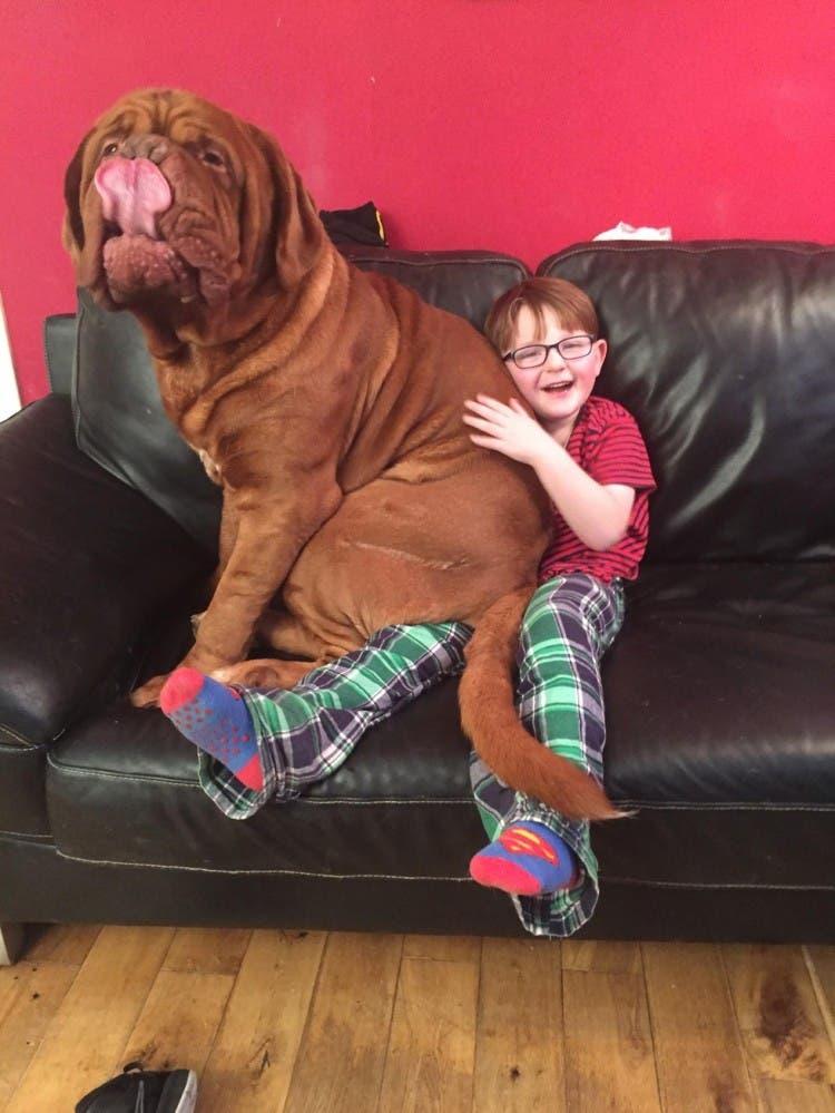perro gigante alfie 1