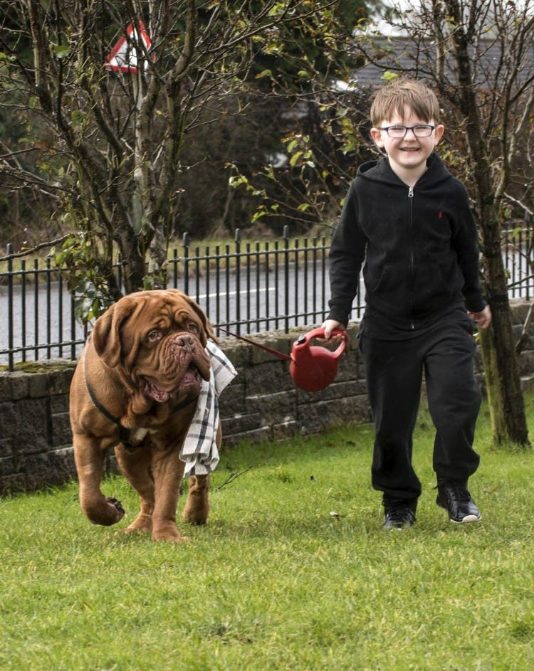 perro gigante alfie 2