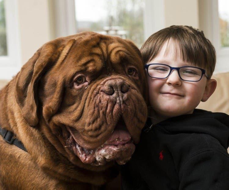 perro gigante alfie 3