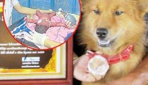perro-heroe-salva-bebe-prematuro-tirado-basura-4