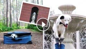 perro-trucos-asombrosos3