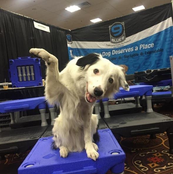 perro-trucos-asombrosos4
