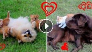 perros-y-gatos2