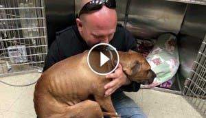 pitbull-rescatado-peleas-perros-apego-hombre-salvo