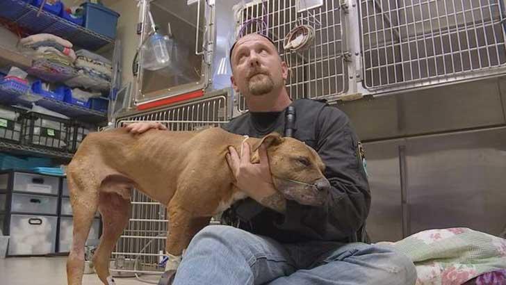 pitbull-rescatado-peleas-perros-apego-hombre-salvo1