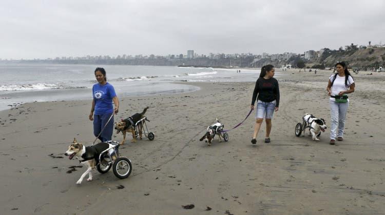 Sara Moran y otras dos voluntarias con sus perros
