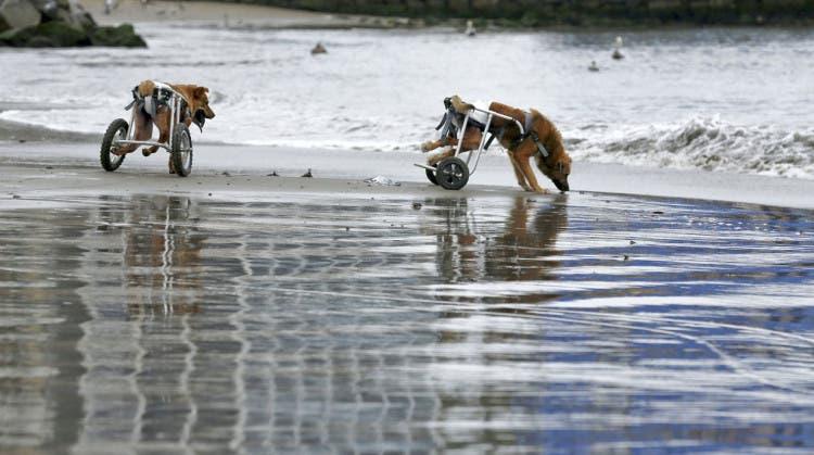 sara-moran-perros-agua