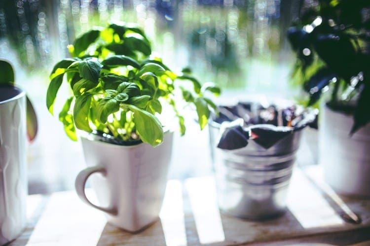 vegetales para comprar y cultivar 5