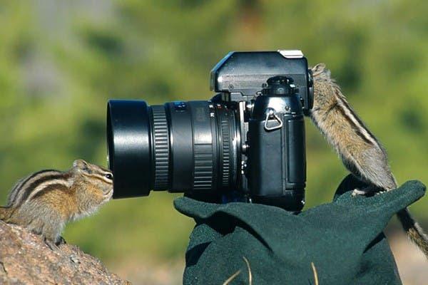 Simpaticos-animales-imitando-fotografos-11
