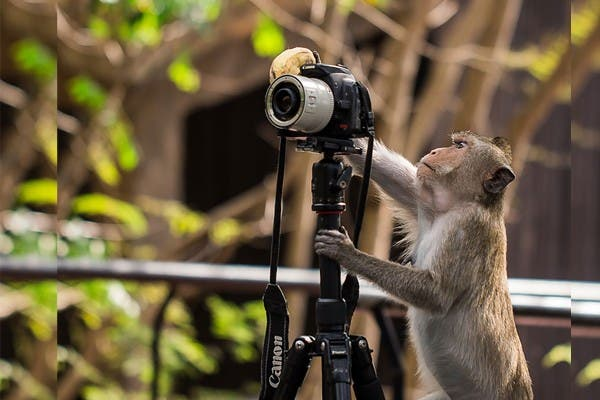 Simpaticos-animales-imitando-fotografos-15