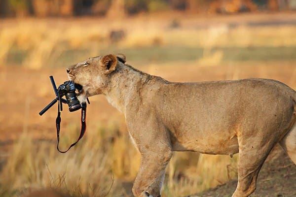 Simpaticos-animales-imitando-fotografos-17