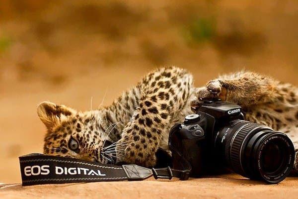 Simpaticos-animales-imitando-fotografos-19