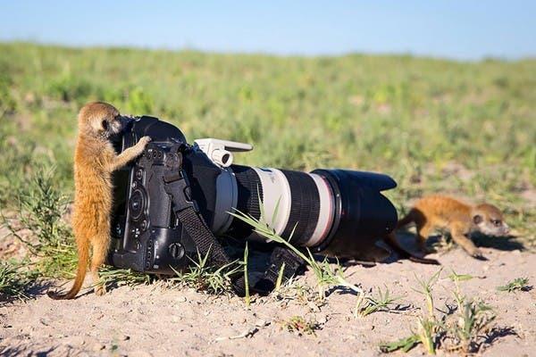 Simpaticos-animales-imitando-fotografos-2