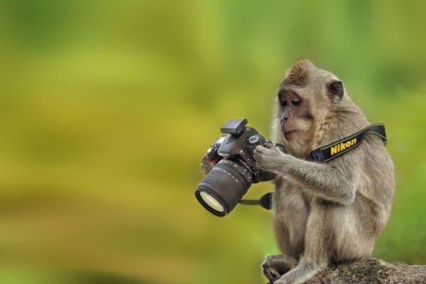 Simpaticos-animales-imitando-fotografos-20