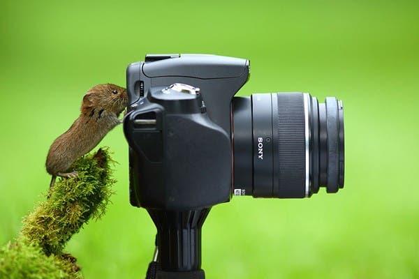 Simpaticos-animales-imitando-fotografos-7
