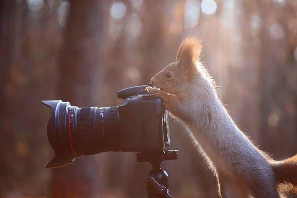 Simpaticos-animales-imitando-fotografos-8