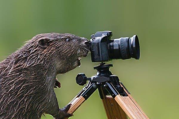 Simpaticos-animales-imitando-fotografos-9