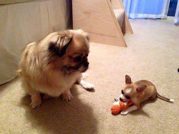 adoptar perro fin de semana 1
