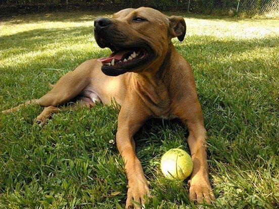 adoptar perro fin de semana 4