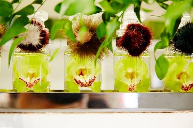 azuma-makoto-vespa-en-tienda-de-flores-9