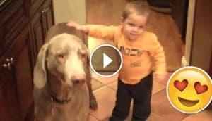 bebe-y-perro-hacen-trucos-a-la-vez2