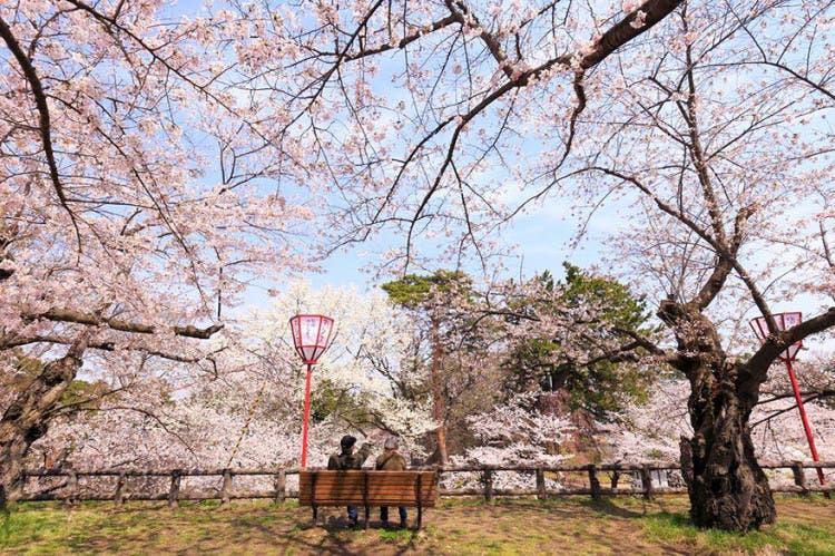 flor de cerezo 11
