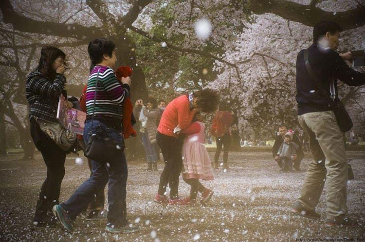 flor de cerezo 15