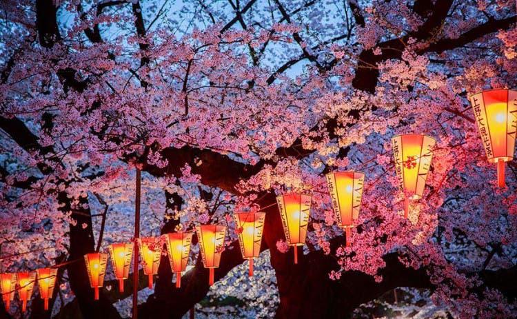 flor de cerezo 4