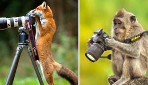 foto-animales