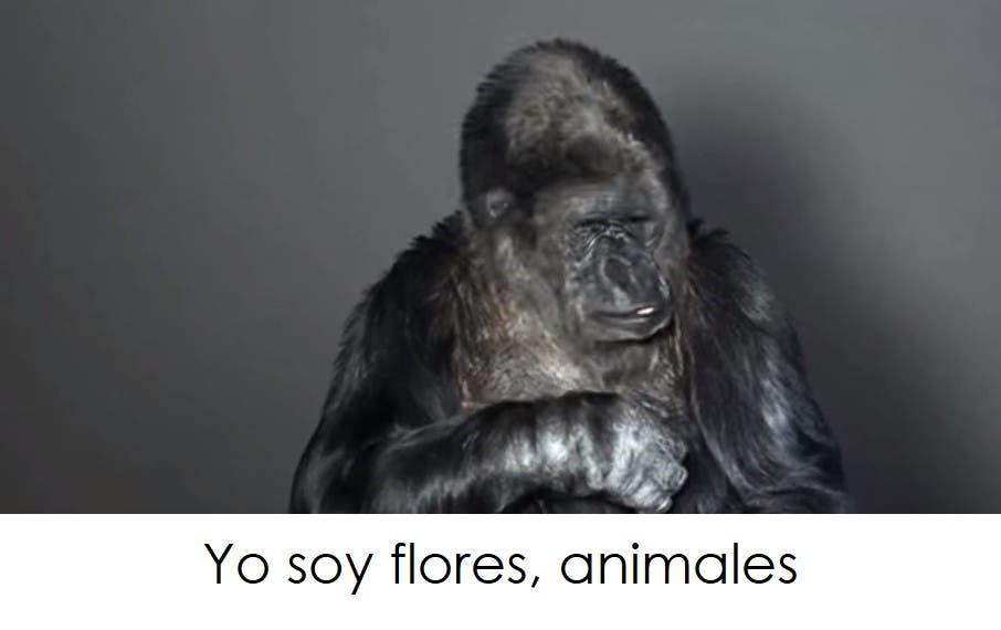 koko-la-gorila-tiene-un-mensaje-1