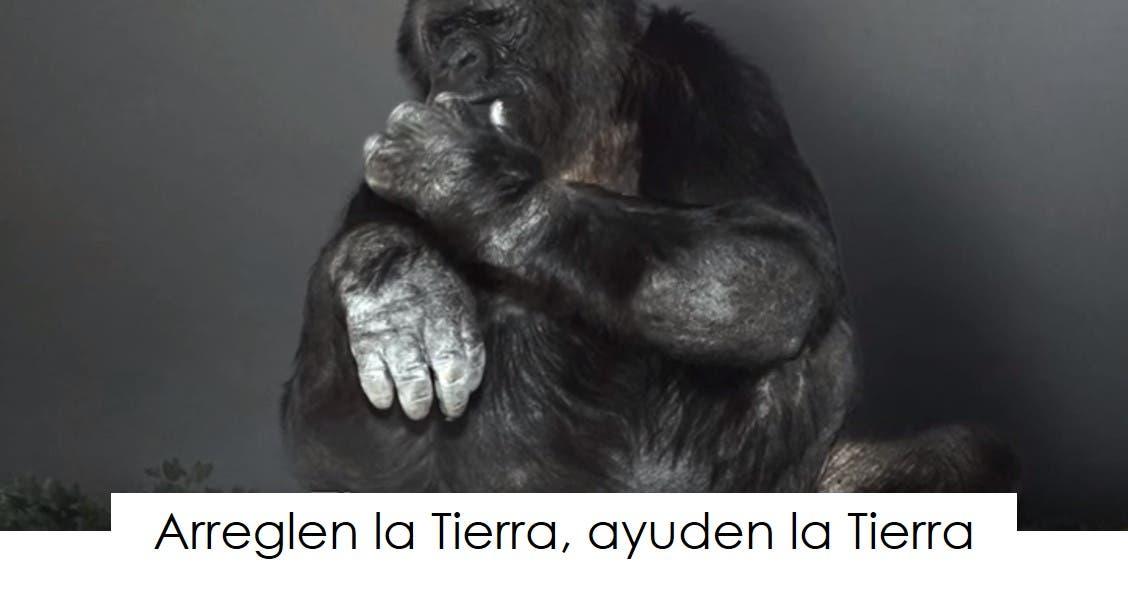 koko-la-gorila-tiene-un-mensaje-10