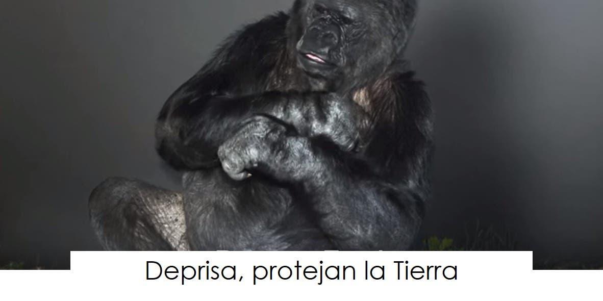 koko-la-gorila-tiene-un-mensaje-11