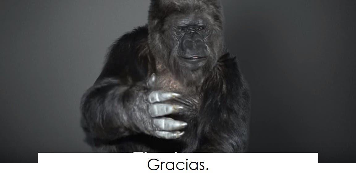 koko-la-gorila-tiene-un-mensaje-13