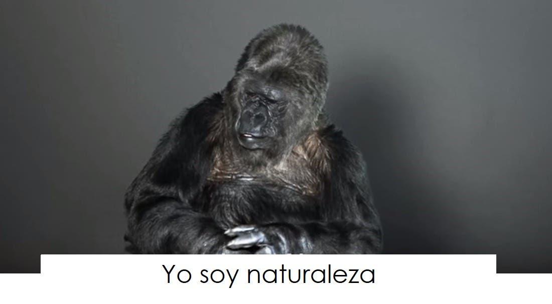 koko-la-gorila-tiene-un-mensaje-14