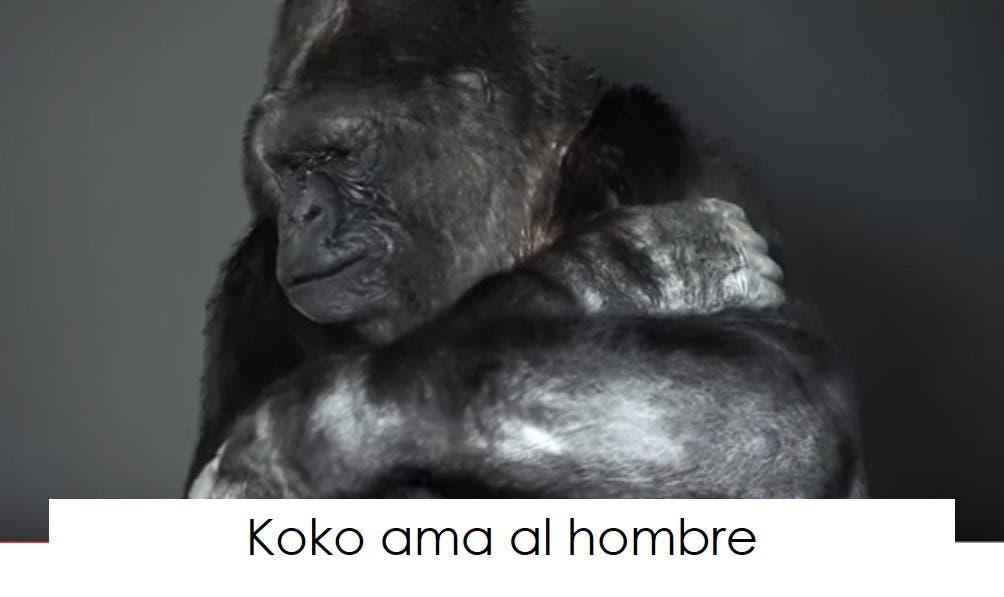 koko-la-gorila-tiene-un-mensaje-3