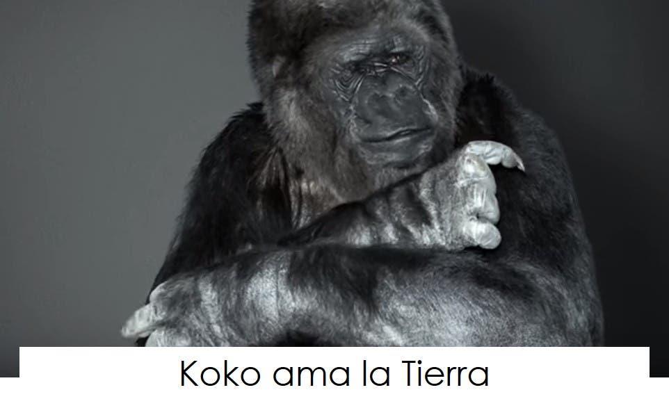 koko-la-gorila-tiene-un-mensaje-4