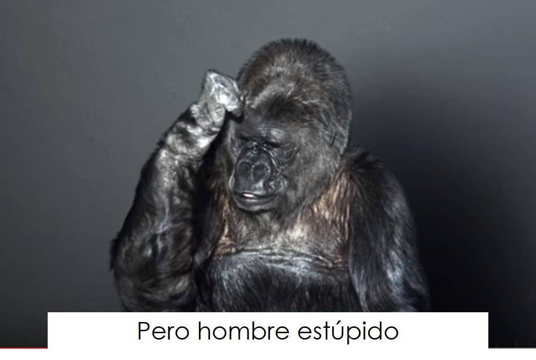 koko-la-gorila-tiene-un-mensaje-5