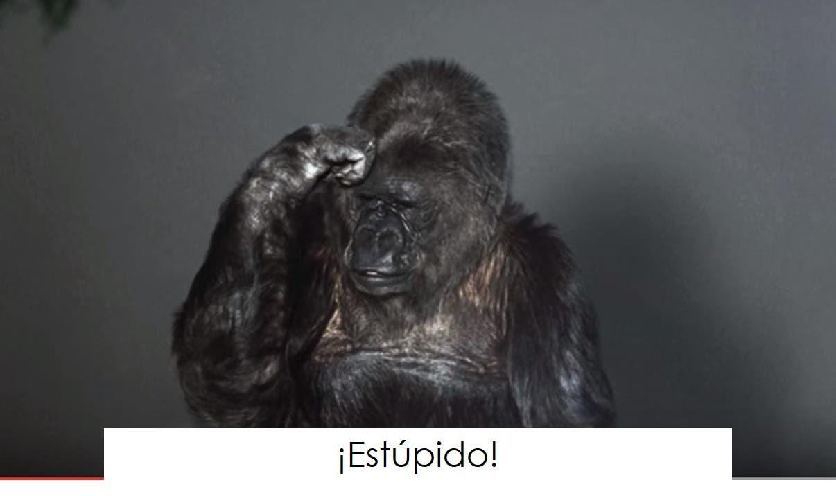 koko-la-gorila-tiene-un-mensaje-6