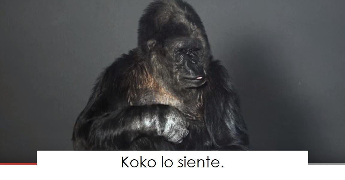 koko-la-gorila-tiene-un-mensaje-7