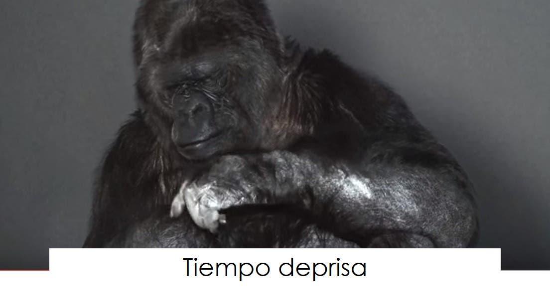 koko-la-gorila-tiene-un-mensaje-9