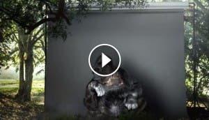 koko-la-gorila-tiene-un-mensaje-portadaconplay