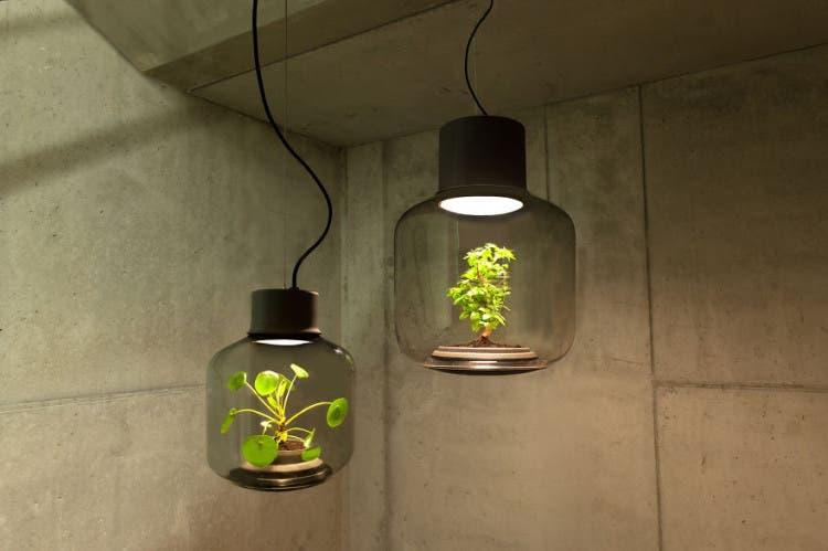 lámparas con plantas 1
