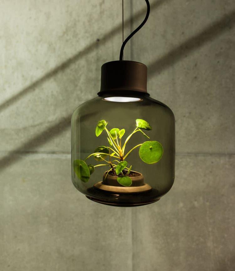 lámparas con plantas 2