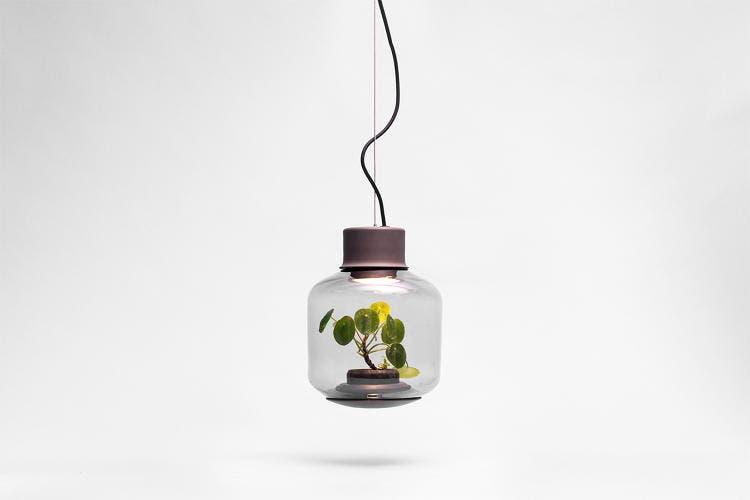 lámparas con plantas 8