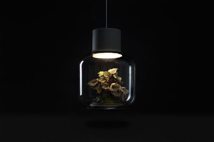 lámparas con plantas 9