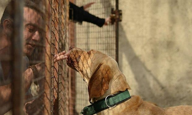 mujer-construye-refugio-de-animales-en-iran1