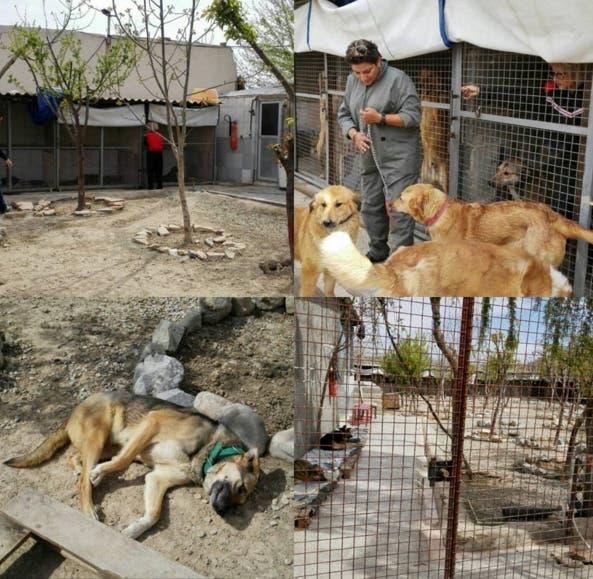 mujer-construye-refugio-de-animales-en-iran11