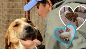 mujer-construye-refugio-de-animales-en-iran2 - copia