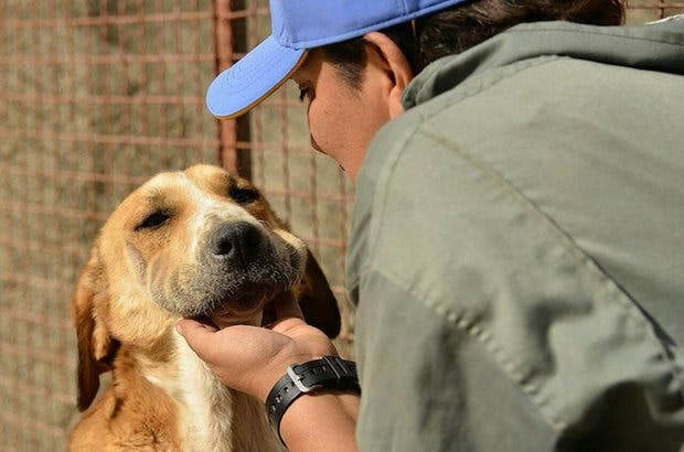 mujer-construye-refugio-de-animales-en-iran2