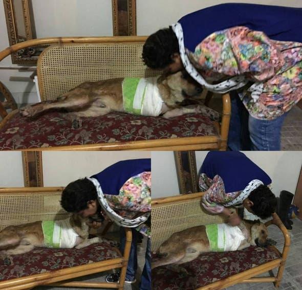 mujer-construye-refugio-de-animales-en-iran7